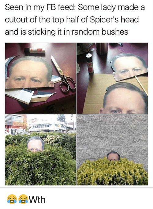 Head, Memes, and 🤖: Seen in my FB feed: Some lady made a  cutout of the top half of Spicer's head  and is sticking it in random bushes 😂😂Wth