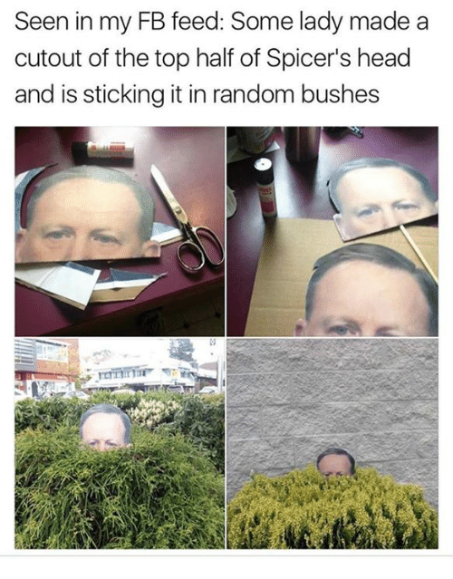Dank, Head, and 🤖: Seen in my FB feed: Some lady made a  cutout of the top half of Spicer's head  and is sticking it in random bushes