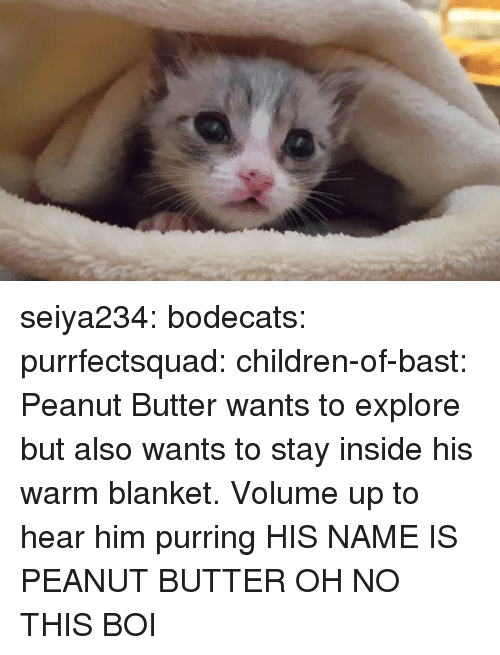 Volume Up: seiya234:  bodecats:  purrfectsquad:  children-of-bast: Peanut Butter wants to explore but also wants to stay inside his warm blanket. Volume up to hear him purring  HIS NAME IS PEANUT BUTTER  OH NO THIS BOI