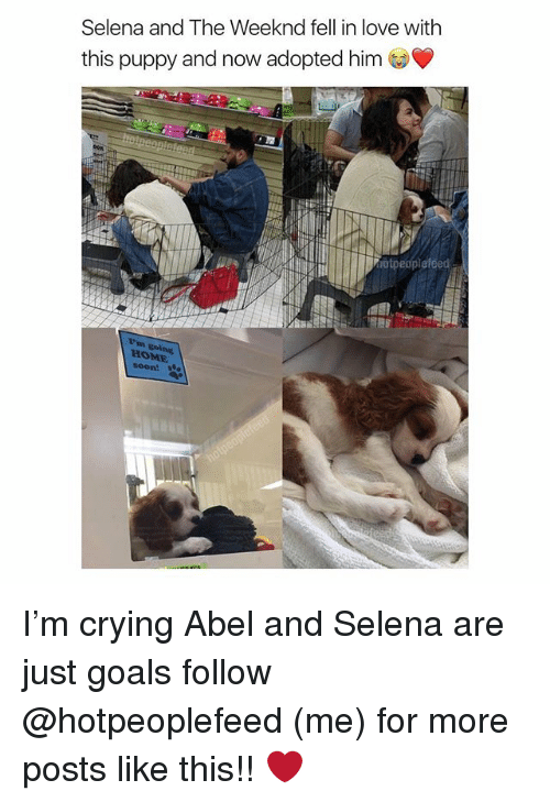 Crying, Goals, and Love: Selena and The Weeknd fell in love with  this puppy and now adopted him  otpeoplefeed  HOME  %oon! I'm crying Abel and Selena are just goals follow @hotpeoplefeed (me) for more posts like this!! ❤️