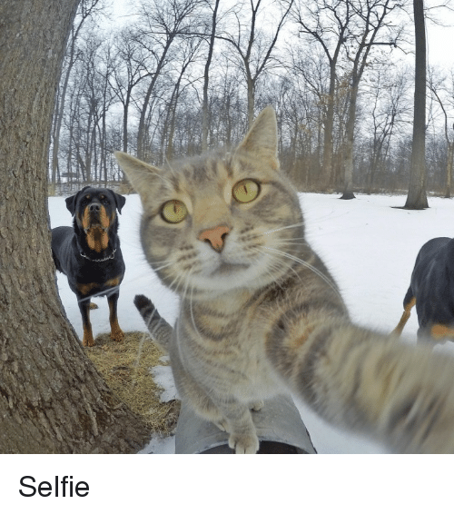 Selfie, The Forest, and Forest: Selfie