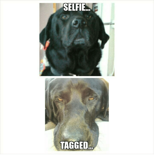 Selfie and Tagged: SELFIE  TAGGED