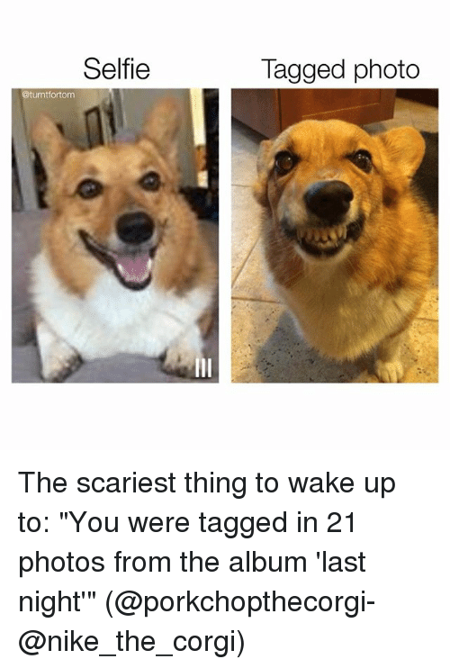 """Corgi, Funny, and Nike: Selfie  @turntfortom  Tagged photo The scariest thing to wake up to: """"You were tagged in 21 photos from the album 'last night'"""" (@porkchopthecorgi-@nike_the_corgi)"""
