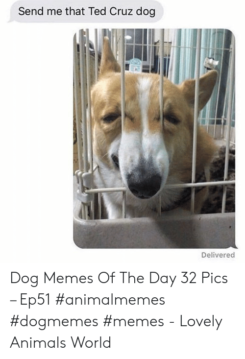 Ted Cruz: Send me that Ted Cruz dog  Delivered Dog Memes Of The Day 32 Pics – Ep51 #animalmemes #dogmemes #memes - Lovely Animals World