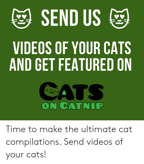 Cats On Catnip: SEND US  VIDEOS OF YOUR CATS  AND GET FEATURED ON  CATS  ON CATNIP Time to make the ultimate cat compilations. Send videos of your cats!