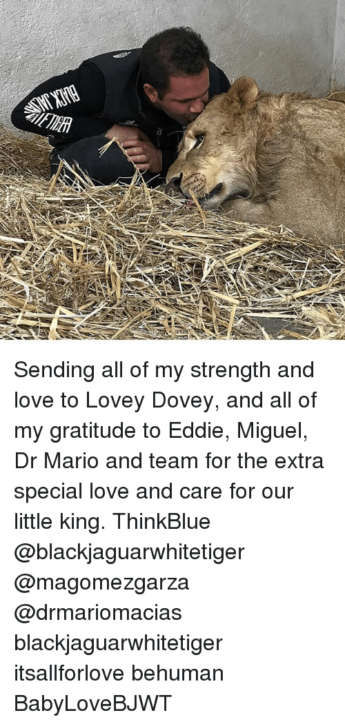 Love, Memes, and Mario: Sending all of my strength and love to Lovey Dovey, and all of my gratitude to Eddie, Miguel, Dr Mario and team for the extra special love and care for our little king. ThinkBlue @blackjaguarwhitetiger @magomezgarza @drmariomacias blackjaguarwhitetiger itsallforlove behuman BabyLoveBJWT