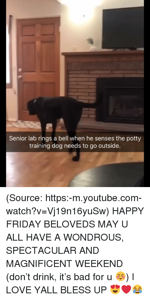 happy friday: Senior lab rings a bell when he senses the potty  training dog needs to go outside. (Source: https:-m.youtube.com-watch?v=Vj19n16yuSw) HAPPY FRIDAY BELOVEDS MAY U ALL HAVE A WONDROUS, SPECTACULAR AND MAGNIFICENT WEEKEND (don't drink, it's bad for u ☺️) I LOVE YALL BLESS UP 😍❤️😂