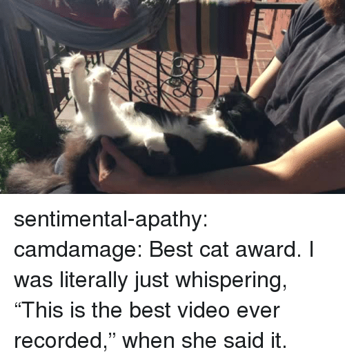 """Best Cat: sentimental-apathy:  camdamage: Best cat award.  I was literally just whispering, """"This is the best video ever recorded,"""" when she said it."""