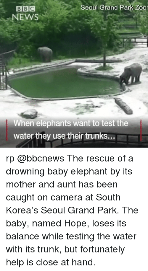 Memes, News, and Trunks: Seoul Grand Park Zoo  BBC  NEWS  When elephants want to test the  water they usetheir trunks... rp @bbcnews The rescue of a drowning baby elephant by its mother and aunt has been caught on camera at South Korea's Seoul Grand Park. The baby, named Hope, loses its balance while testing the water with its trunk, but fortunately help is close at hand.