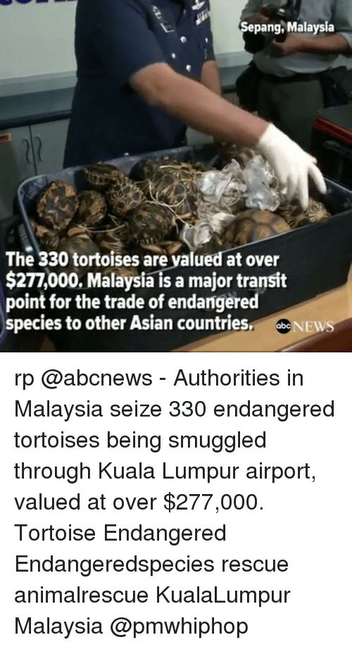 Asian, Memes, and Malaysia: Sepang, Malaysia  The 330 tortoises are yalued at over  $277,000, Malaysia is a major transit  point for the trade of endangered  species to other Asian countries  NEW rp @abcnews - Authorities in Malaysia seize 330 endangered tortoises being smuggled through Kuala Lumpur airport, valued at over $277,000. Tortoise Endangered Endangeredspecies rescue animalrescue KualaLumpur Malaysia @pmwhiphop