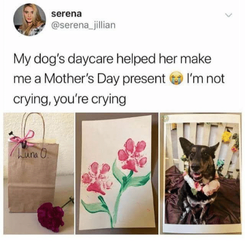 serena: serena  @serena_jillian  My dog's daycare helped her make  me a Mother's Day present I'm not  crying, you're crying  huna O