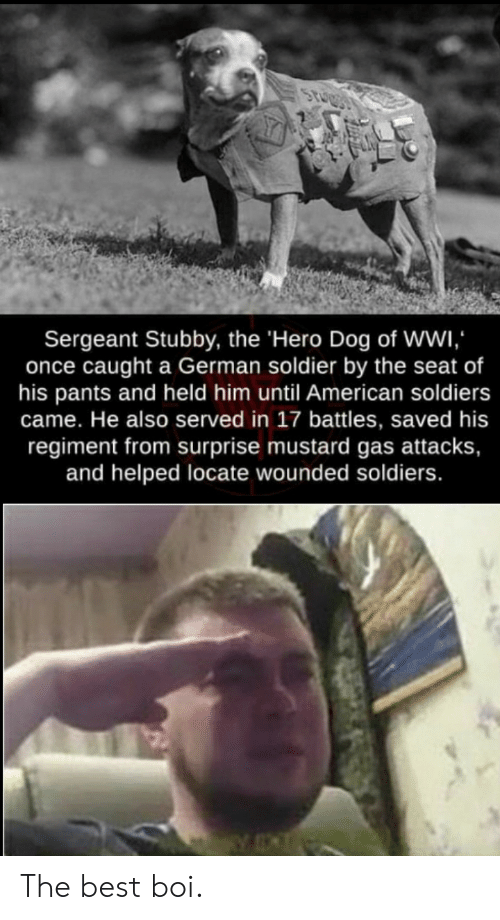battles: Sergeant Stubby, the 'Hero Dog of Wwi  once caught a German soldier by the seat of  his pants and held him until American soldiers  came. He also served in 17 battles, saved his  regiment from surprise mustard gas attacks,  and helped locate wounded soldiers. The best boi.