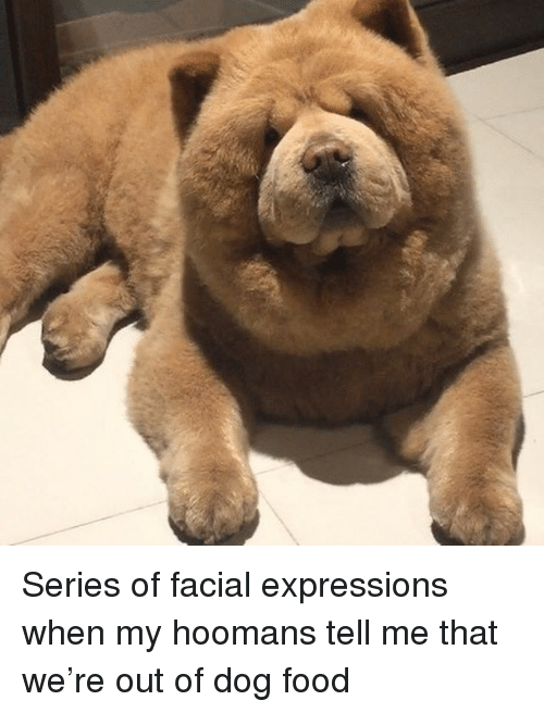 Hoomans: Series of facial expressions when my hoomans tell me that we're out of dog food