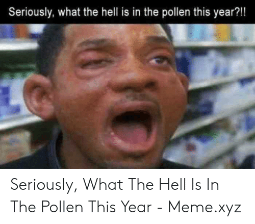 What The Hell Meme: Seriously, what the hell is in the pollen this year?!! Seriously, What The Hell Is In The Pollen This Year - Meme.xyz