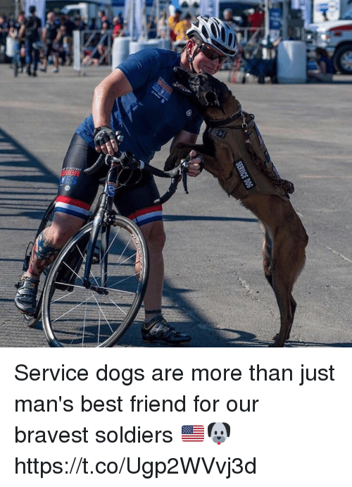 Best Friend, Dogs, and Memes: SERVICE DOG Service dogs are more than just man's best friend for our bravest soldiers 🇺🇸🐶 https://t.co/Ugp2WVvj3d