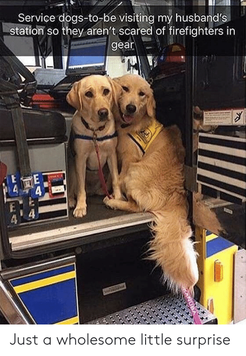 husbands: Service dogs-to-be visiting my husband's  station so they aren't scared of firefighters in  gear Just a wholesome little surprise