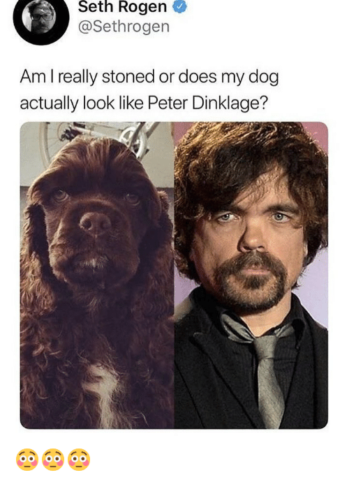 Funny, Seth Rogen, and Peter Dinklage: Seth Rogen  @Sethrogen  Am I really stoned or does my dog  actually look like Peter Dinklage? 😳😳😳