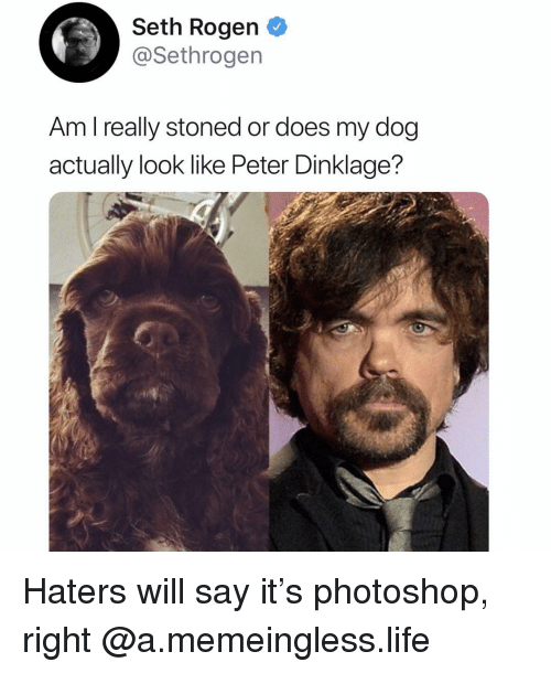 Funny, Life, and Photoshop: Seth Rogen  @Sethrogen  Am l really stoned or does my dog  actually look like Peter Dinklage? Haters will say it's photoshop, right @a.memeingless.life