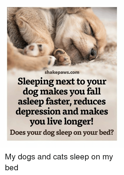 Cats, Dogs, and Fall: shakepaws.com  Sleeping next to your  dog makes you fall  asleep faster, reduces  depression and makes  you live longer!  Does your dog sleep on your bed? My dogs and cats sleep on my bed