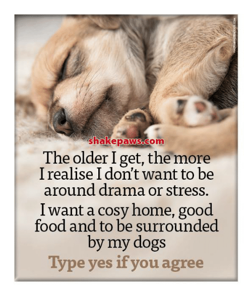 Memes, 🤖, and Cosi: Shakepaws.com  The older I get, the more  I realise I don't want to be  around drama or stress.  I want a cosy home, good  food and to be surrounded  by my dogs  Type yes if you agree