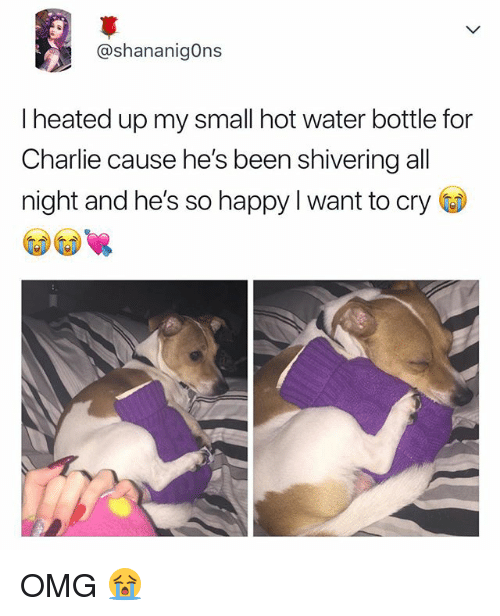 Charlie, Omg, and Happy: @shananigOns  I heated up my small hot water bottle for  Charlie cause he's been shivering all  night and he's so happy I want to cry OMG 😭