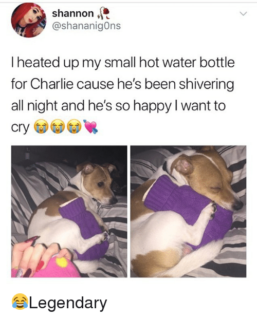 Charlie, Memes, and Happy: Shannon,  @shananigOns  I heated up my small hot water bottle  for Charlie cause he's been shivering  all night and he's so happy I want to  cry 😂Legendary