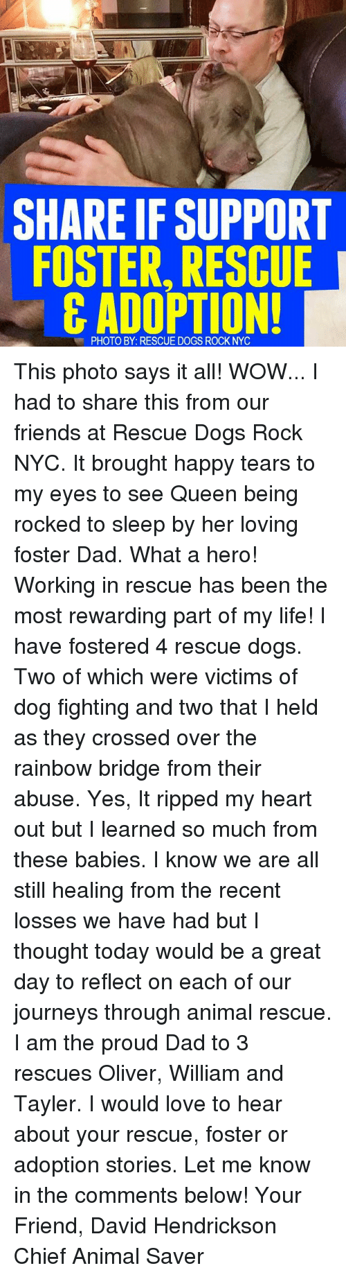 Best Dog Rescue Nyc