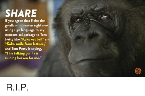"""Dank, Heaven, and Petty: SHARE  if you agree that Koko the  gorilla is in heaven right now  using sign language to say  nonsensical garbage to Tom  Petty like """"Koko eat ball"""" and  """"Koko smile from lettuce,""""  and Tom Petty is saying,  """"This talking gorilla is  ruining heaven for me."""" R.I.P."""
