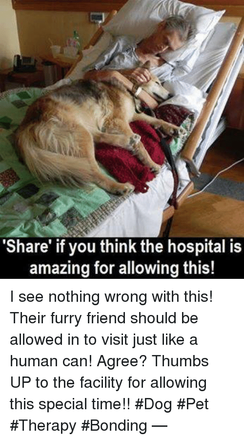 """I See Nothing: """"Share"""" if you think the hospital is  amazing for allowing this! I see nothing wrong with this! Their furry friend should be allowed in to visit just like a human can! Agree? Thumbs UP to the facility for allowing this special time!! #Dog #Pet #Therapy #Bonding —"""