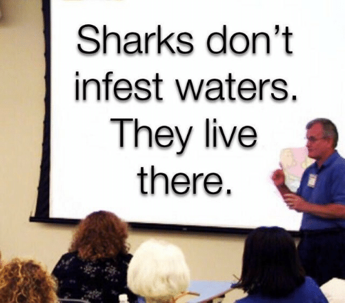 They Live: Sharks don't  infest waters.  They live  there.