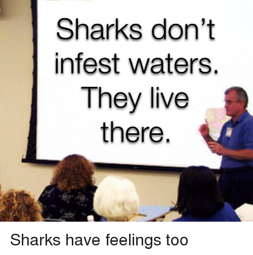 They Live: Sharks don't  infest waters.  They live  there Sharks have feelings too