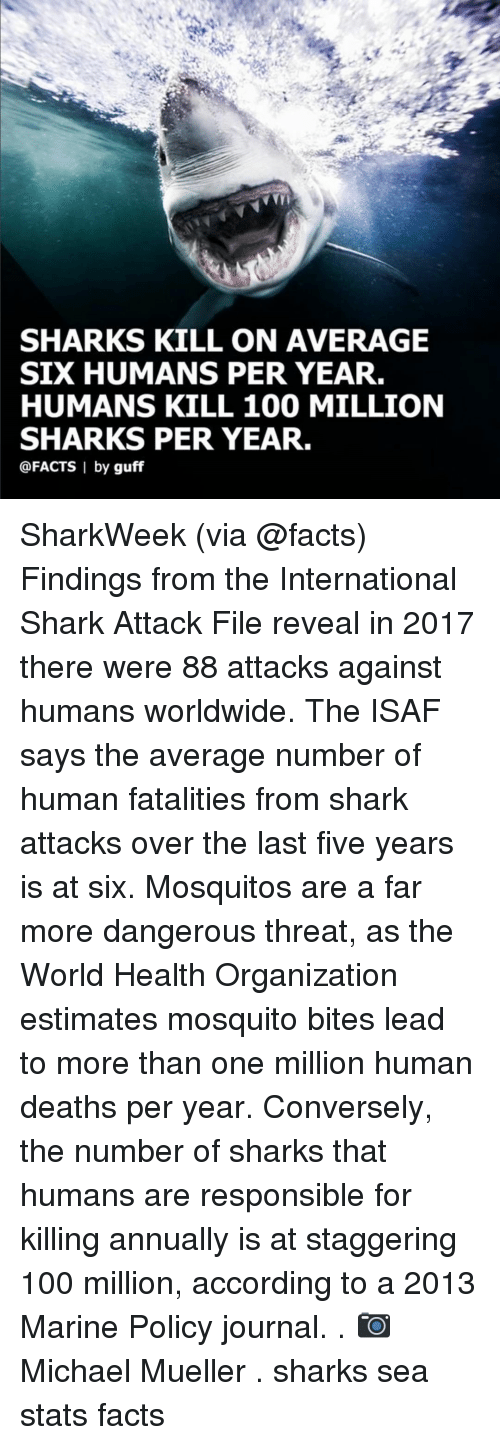 Anaconda, Facts, and Memes: SHARKS KILL ON AVERAGE  SIX HUMANS PER YEAR.  HUMANS KILL 100 MILLION  SHARKS PER YEAR.  @FACTS I by guff SharkWeek (via @facts) Findings from the International Shark Attack File reveal in 2017 there were 88 attacks against humans worldwide. The ISAF says the average number of human fatalities from shark attacks over the last five years is at six. Mosquitos are a far more dangerous threat, as the World Health Organization estimates mosquito bites lead to more than one million human deaths per year. Conversely, the number of sharks that humans are responsible for killing annually is at staggering 100 million, according to a 2013 Marine Policy journal. . 📷 Michael Mueller . sharks sea stats facts