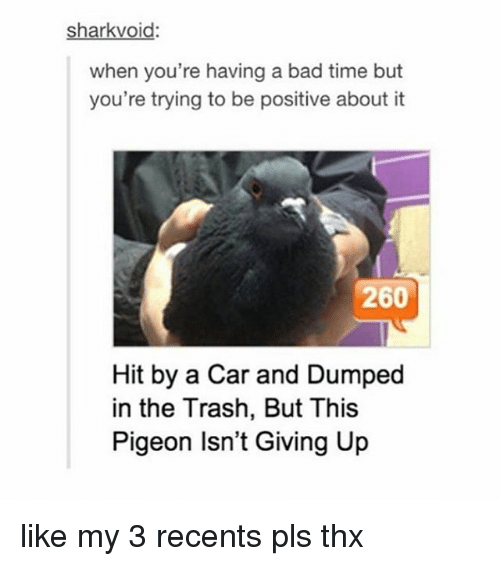 Trying To Be Positive: sharkvoid:  when you're having a bad time but  you're trying to be positive about it  260  Hit by a Car and Dumped  in the Trash, But This  Pigeon Isn't Giving Up like my 3 recents pls thx