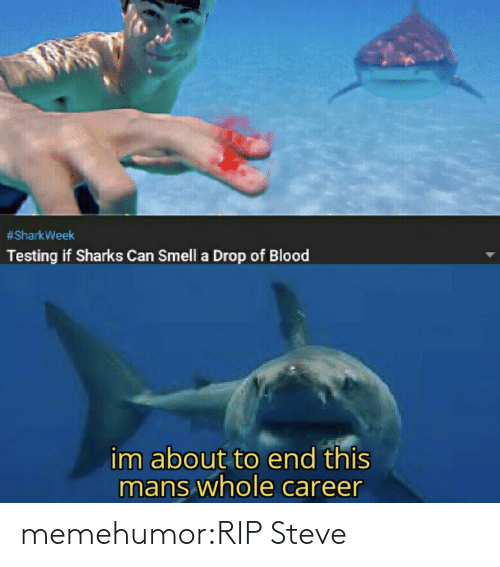 Testing:  #SharkWeek  Testing if Sharks Can Smell a Drop of Blood  im about to end this  mans whole career memehumor:RIP Steve
