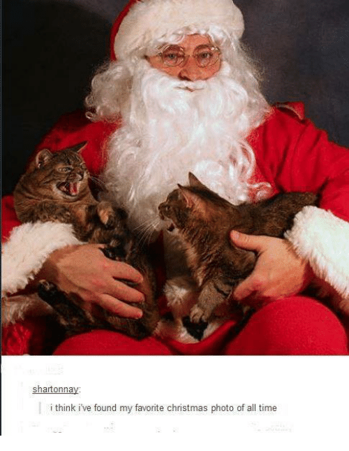 Christmas, Memes, and Time: shartonnay  i think ive found my favorite christmas photo of all time