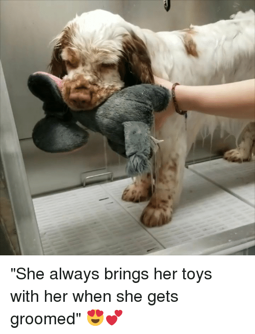 """Toys, Her, and She: """"She always brings her toys with her when she gets groomed"""" 😍💕"""