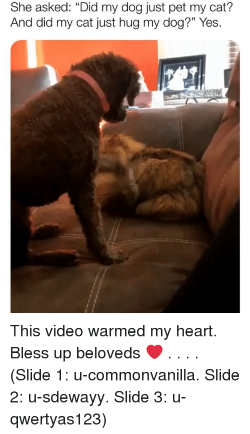 """Bless up: She asked: """"Did my dog just pet my cat?  And did my cat just hug my dog?"""" Yes. This video warmed my heart. Bless up beloveds ❤️ . . . . (Slide 1: u-commonvanilla. Slide 2: u-sdewayy. Slide 3: u-qwertyas123)"""