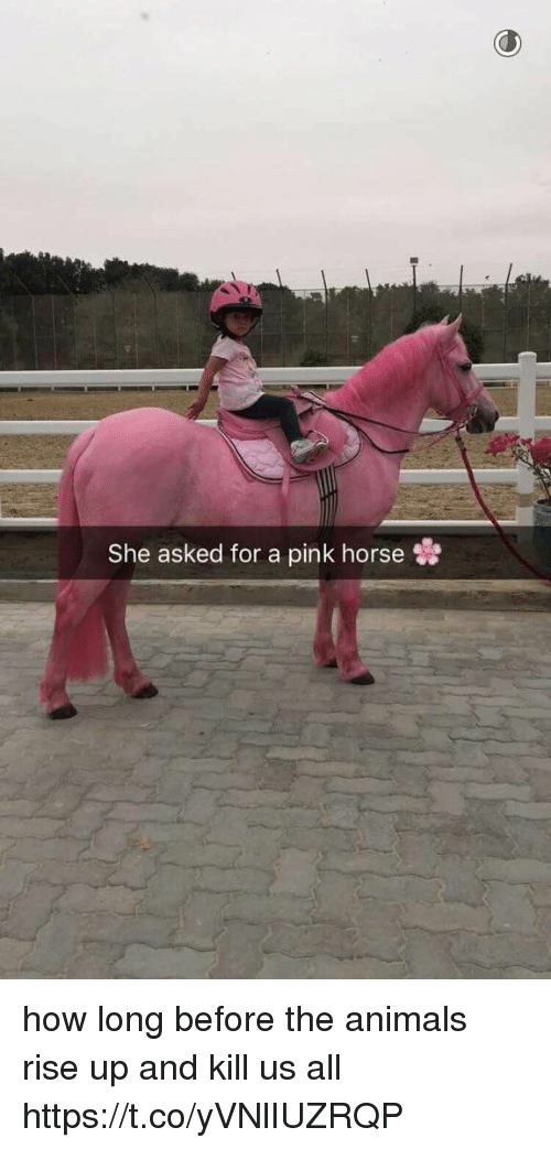 Animals, Horse, and Pink: She asked for a pink horse how long before the animals rise up and kill us all https://t.co/yVNlIUZRQP