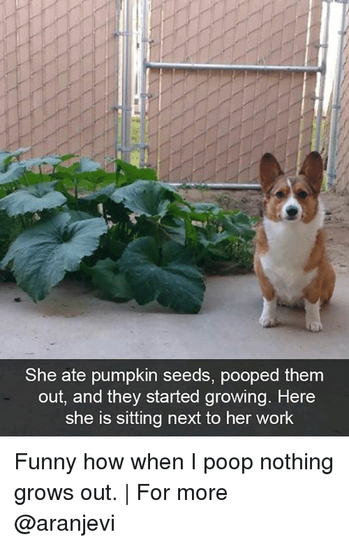 I Pooped: She ate pumpkin seeds, pooped them  out, and they started growing. Here  She is sitting next to her work Funny how when I poop nothing grows out. | For more @aranjevi