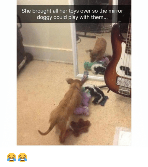 Dank, Mirror, and Toys: She brought all her toys over so the mirror  doggy could play with them... 😂😂