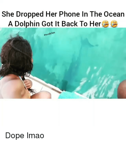 Dope, Funny, and Lmao: She Dropped Her Phone In The Ocean  A Dolphin Got It Back To Her  odclips  Rho Dope lmao