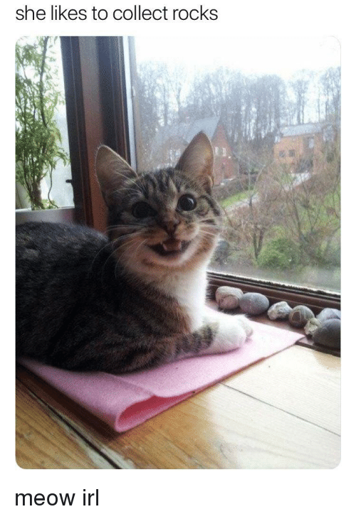 Irl, She, and Meow: she likes to collect rocks meow irl