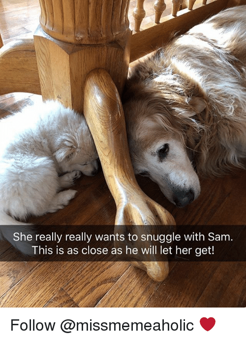 Memes, 🤖, and Her: She really really wants to snuggle with Sam.  This is as close as he will let her get! Follow @missmemeaholic ❤️