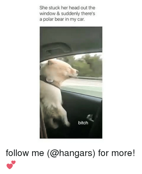 Bitch, Head, and Memes: She stuck her head out the  window & suddenly there's  a polar bear in my car.  bitch follow me (@hangars) for more! 💕