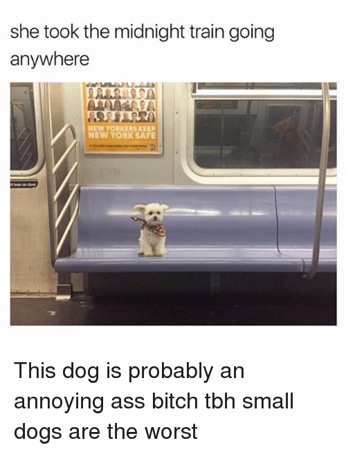 Ass, Bitch, and Dogs: she took the midnight train going  anywhere  NEW YORKERS KEEP  NEW YORK SAFE This dog is probably an annoying ass bitch tbh small dogs are the worst