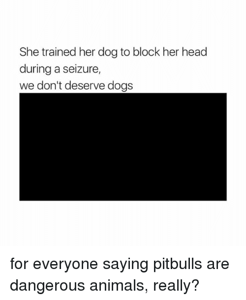 Animals, Dogs, and Head: She trained her dog to block her head  during a seizure,  we don't deserve dogs for everyone saying pitbulls are dangerous animals, really?