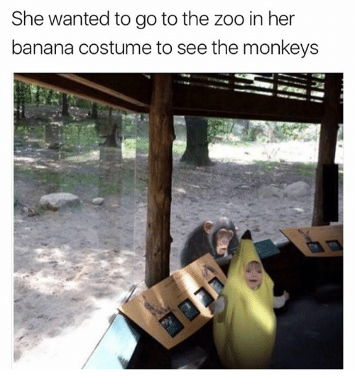 Dank, Banana, and 🤖: She wanted to go to the zoo in her  banana costume to see the monkeys
