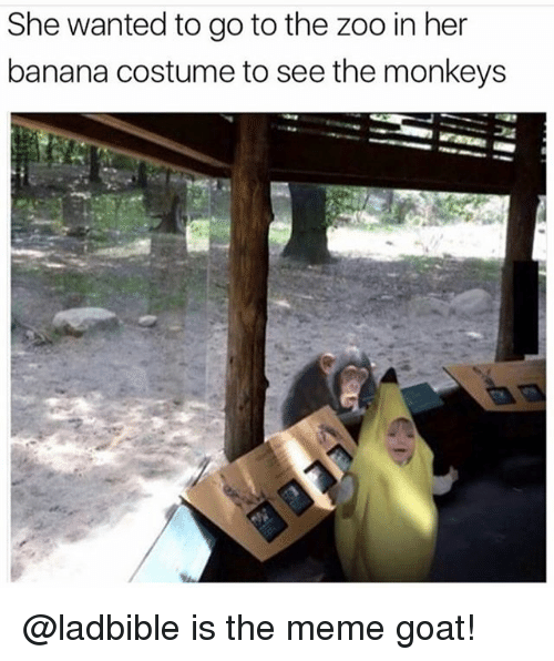 Funny, Meme, and Goat: She wanted to go to the zoo in her  banana costume to see the monkeys @ladbible is the meme goat!