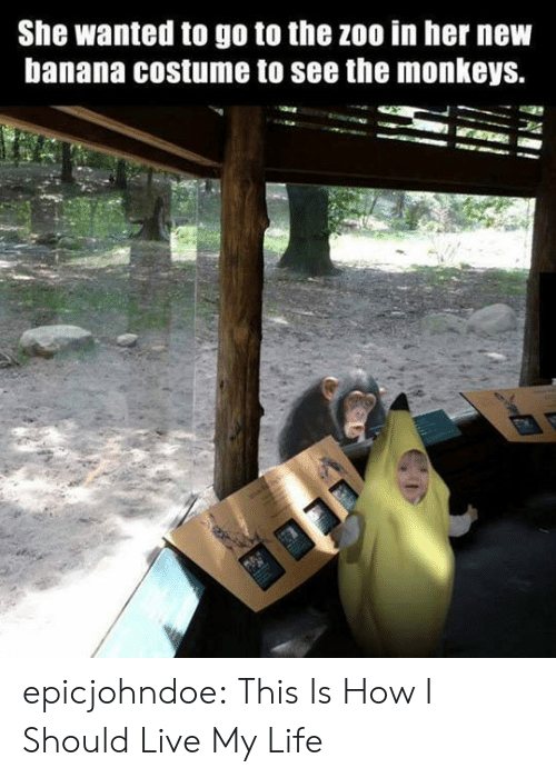 Live My Life: She wanted to go to the zoo in her nevw  banana costume to see the monkeys. epicjohndoe:  This Is How I Should Live My Life