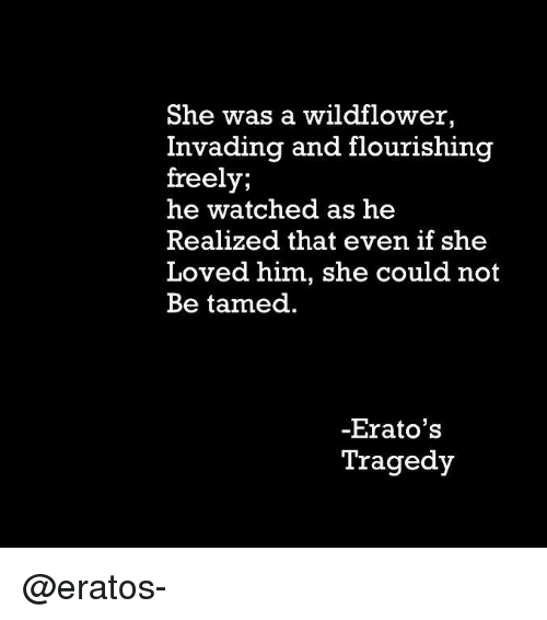 tamed: She was a wildflower,  Invading and flourishing  freely;  he watched as he  Realized that even if she  Loved him, she could not  Be tamed  Erato's  Tragedy @eratos-